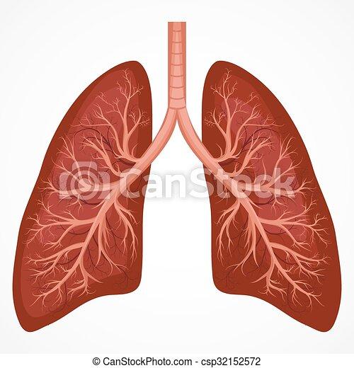 Koerperbau, diagramm, lunge, menschliche . Atmungs, krebs ...