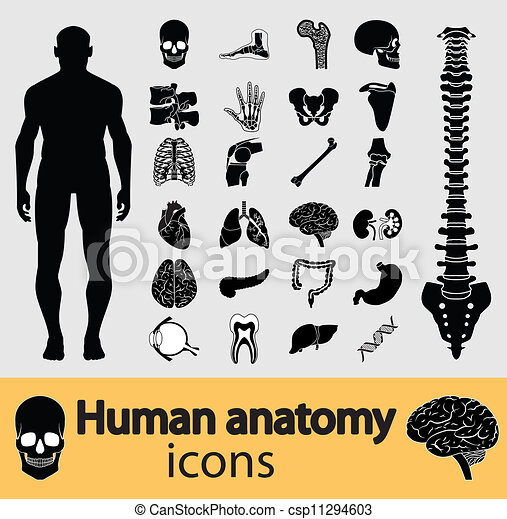 Menschliche Anatomie-Ikonen - csp11294603