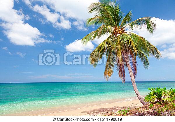 Playa tropical con palma de coco. Koh lanta, Tailandia - csp11798019