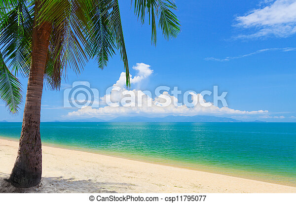 Playa con palma de coco y mar, koh Samui, Tailandia - csp11795077