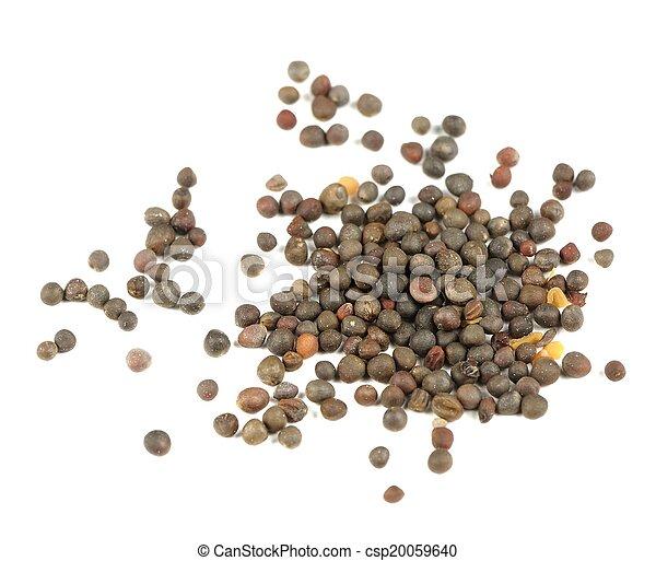 Kohlrabi (German Turnip) Seeds Isolated on White Background - csp20059640