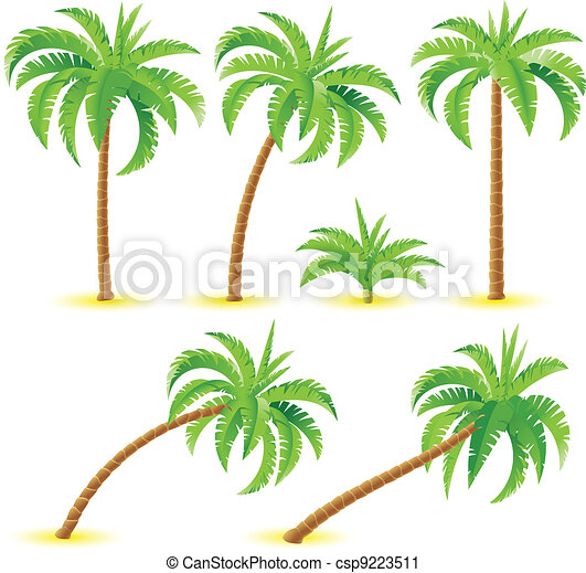 kokosnoot palmen - csp9223511