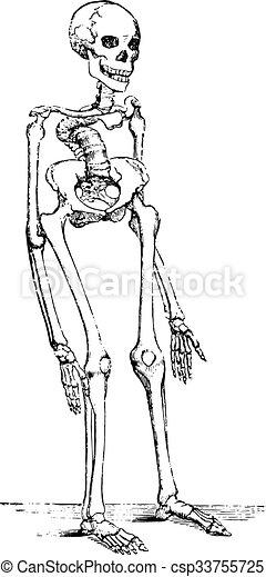 kolonn, skelett, deformerat, årgång, ryggrads, rickets, deflected, engraving. - csp33755725