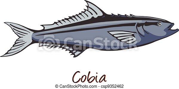 kolor, cobia, ilustracja - csp9352462