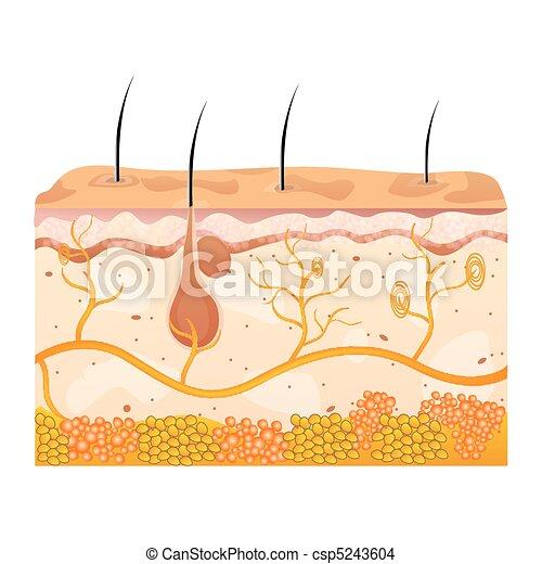 komórki, skóra - csp5243604