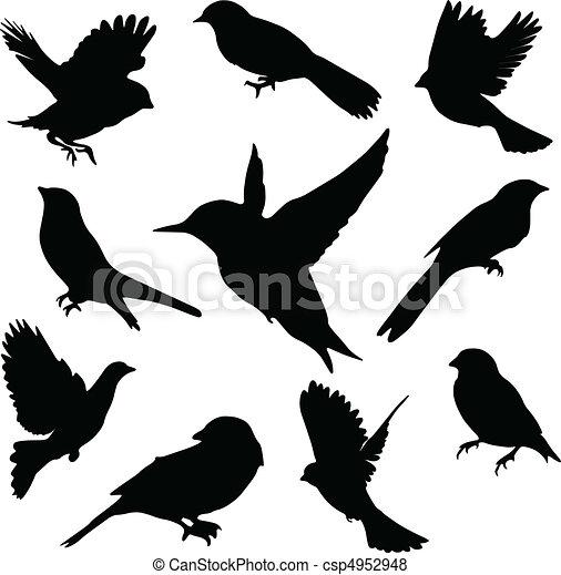 komplet, birds.vector - csp4952948