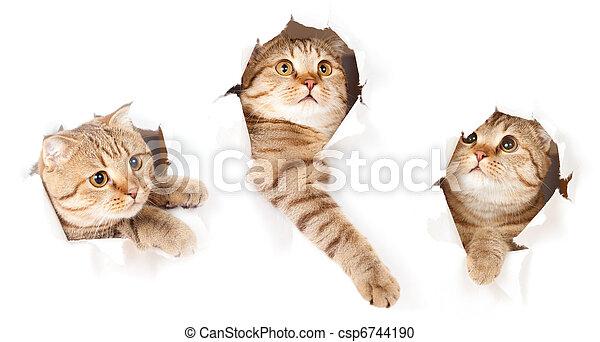 komplet, porwany, odizolowany, kot, papier, otwór, jeden, bok - csp6744190