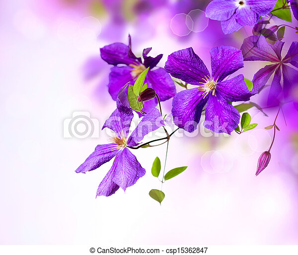 konst, flower., klematis, design, viol blommar, gräns - csp15362847