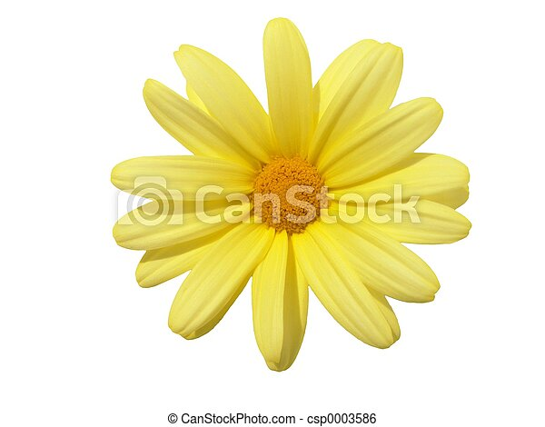 Blumenkopf - csp0003586