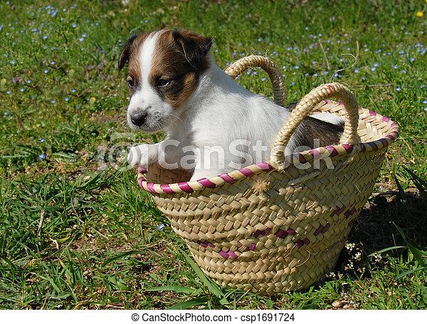 korb, junger hund - csp1691724