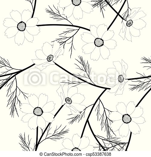 Kosmos blume, weißer hintergrund. Blume, illustration., hintergrund ...