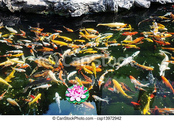 koy fish in the The Jade Buddha Temple shanghai china - csp13972942