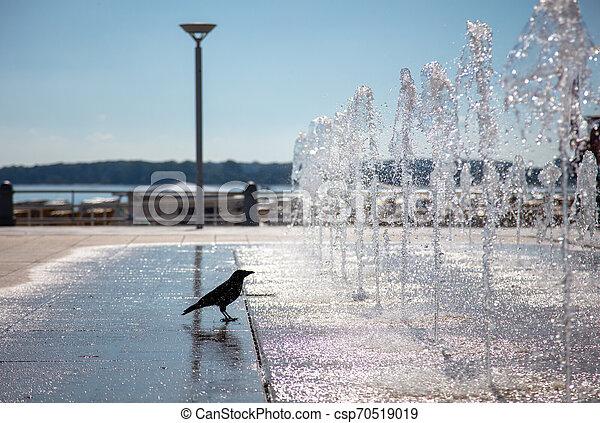 Eine Krähe ängstigt ihren Durst an einem Brunnen - csp70519019