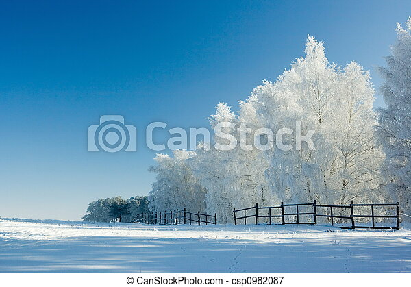krajobraz, zima drzewa - csp0982087