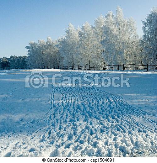 krajobraz, zima drzewa - csp1504691
