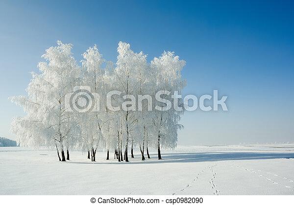 krajobraz, zima drzewa - csp0982090