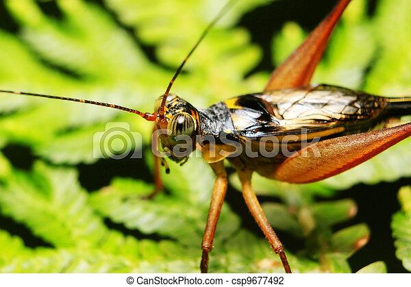Krekel blad groene taken brink loof rand krekel stockfoto krekel blad groene csp9677492 altavistaventures Images