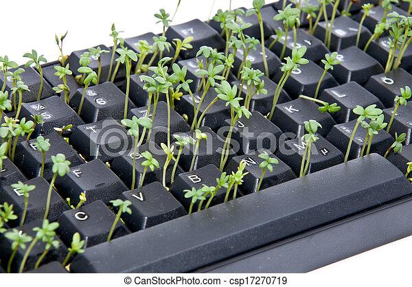 Kresse In Tastatur