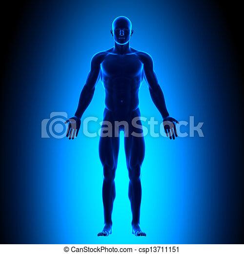 krop, blå, fulde, conce, -, forside udsigt - csp13711151