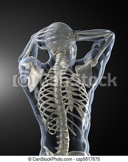 krop skander, medicinsk, tilbage, menneske, udsigter - csp5817675