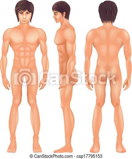 kropp, mänsklig - csp17795153