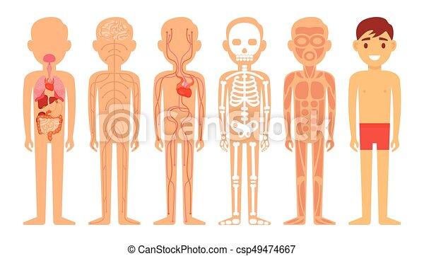 kropp, olik, illustration, diagram, system, mänsklig - csp49474667