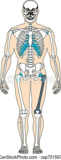 kropp, vektor, illustration, mänsklig, system - csp70159778