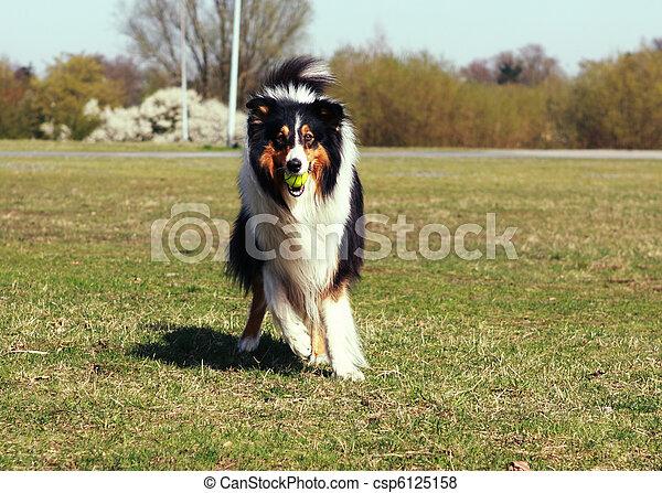 kugel, hund - csp6125158