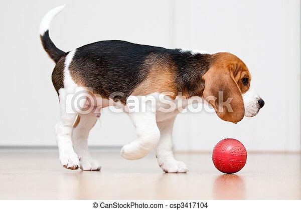 kugel, hund, spielende  - csp3417104