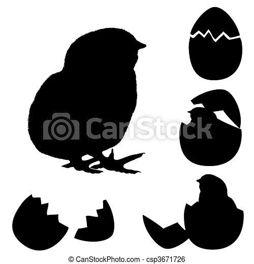 kuiken, shell., egg's, pasgeboren - csp3671726