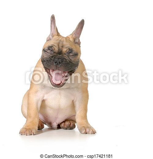 kutya, nevető - csp17421181