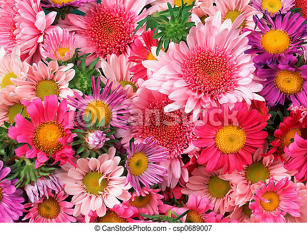 květiny, grafické pozadí - csp0689007