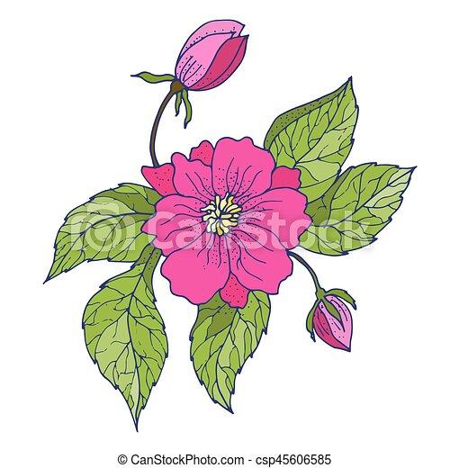 Kvetiny Kresleni Pivonka Rukopis Pivonka Pattern Seamless