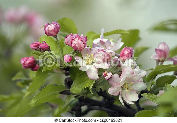 květiny - csp0463821