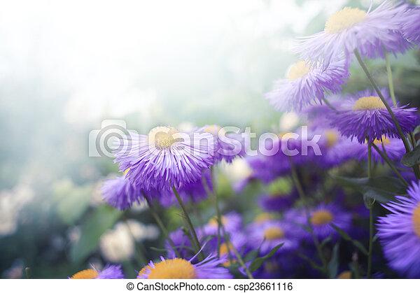 květiny - csp23661116