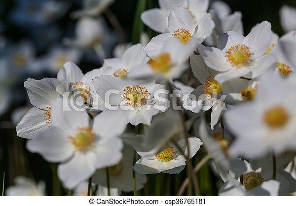 květiny - csp36765181