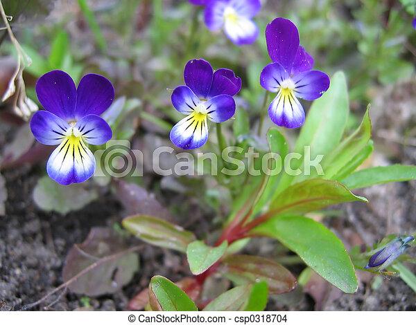 květiny - csp0318704