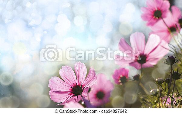 květiny - csp34027642