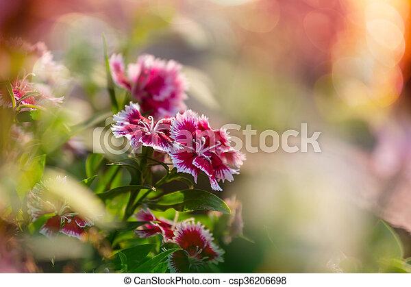 květiny - csp36206698
