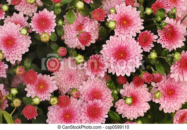 květiny - csp0599110