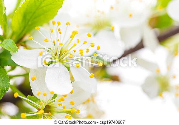 květiny - csp19740607