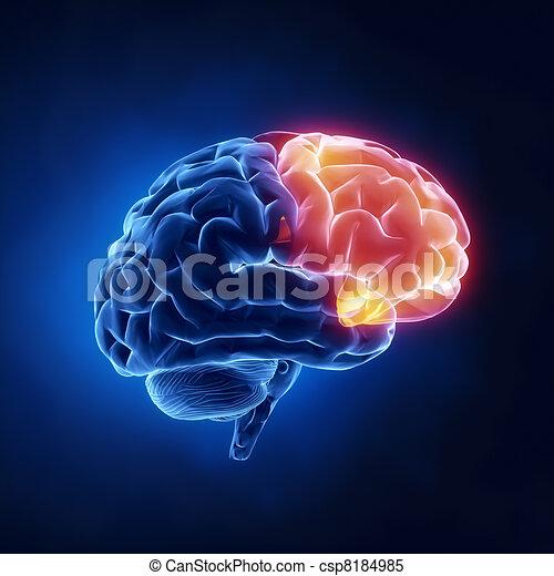 kwab, frontaal, -, hersenen, menselijk, rontgen, aanzicht - csp8184985