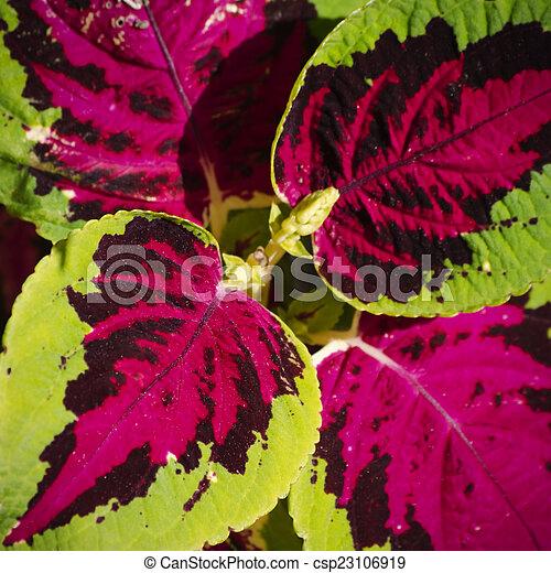 Niewiarygodnie Fotografia, jasny, kwiat, pokrzywka, tło. BU73
