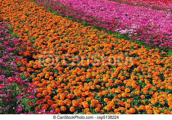 kwiaty, ogród, pełny - csp5138224