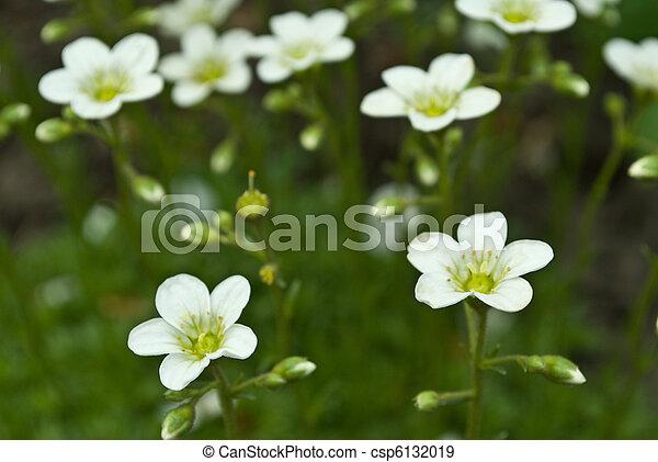 kwiaty - csp6132019
