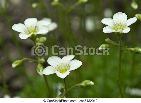 kwiaty - csp6132049