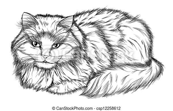 Lápiz Gato Negro Blanco Dibujo Acostado