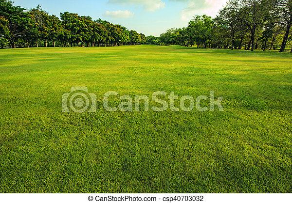 lätt, parkera, morgon, fält, grönt gräs, publik - csp40703032