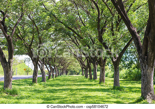 lätt, parkera, publik, träd, sol - csp58104672
