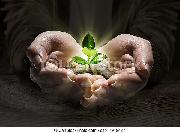 lätt, växt, begrepp, räcker - csp17919427